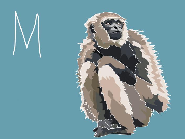 M is for monkey illustration