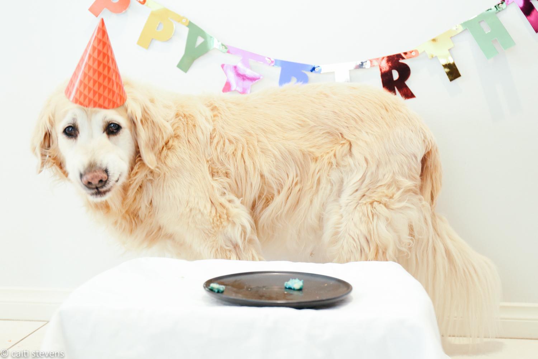 Astonishing Bellas Birthday Cake Caiti Stevens Funny Birthday Cards Online Alyptdamsfinfo